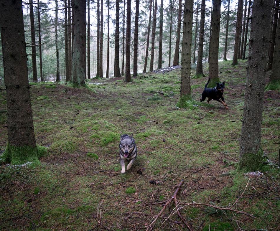 skog, zlatan, freja0224 copy
